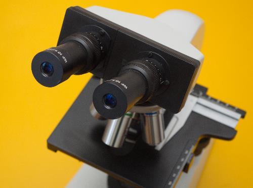 mikroskop hund will wilozyt v 365. Black Bedroom Furniture Sets. Home Design Ideas